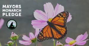 Mayor's Monarch Pledge sets goals to protect pollinators.