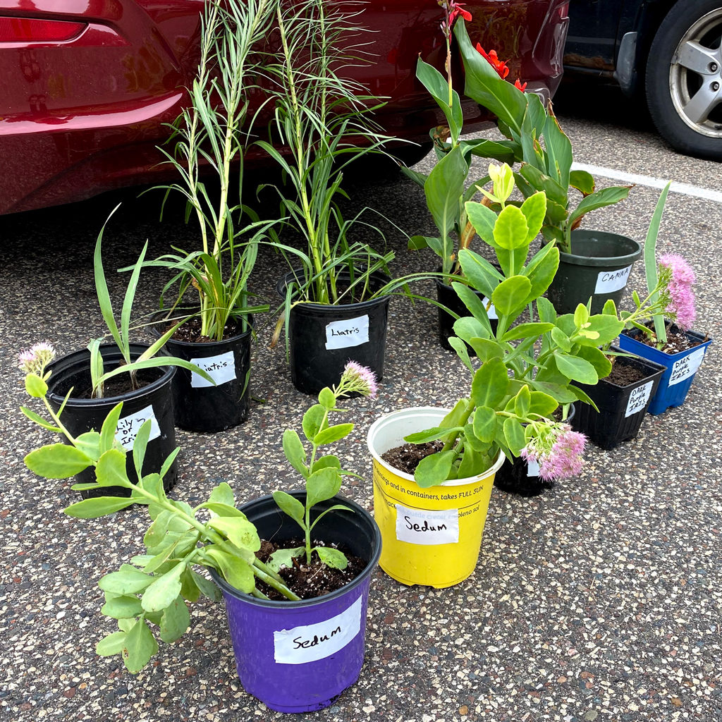 Individually labeled plants in cups ready to be traded at a plant exchange.