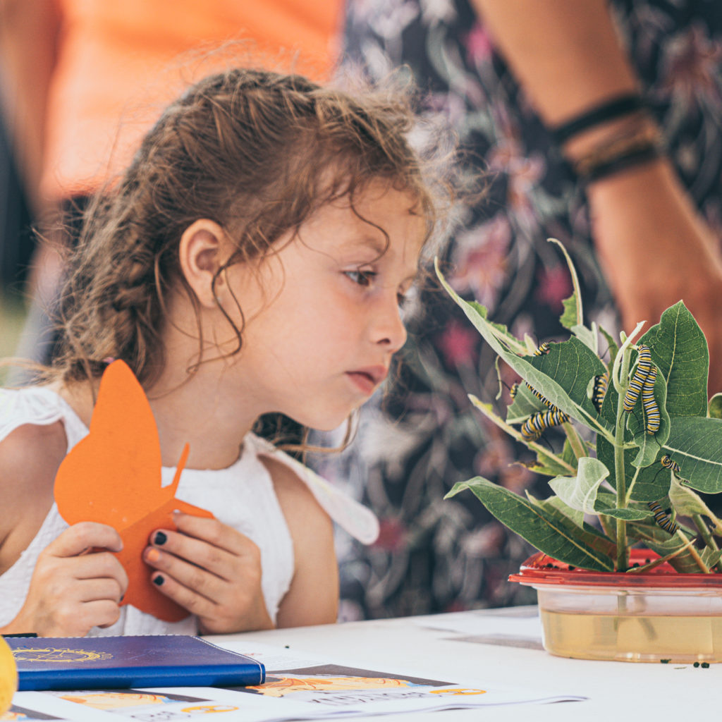 A girl at the 2021 Columbia Heights, MN Monarch Festival holds a butterfly cutout while examining Monarch caterpillars on milkweed leaves.